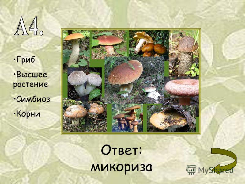 Гриб Высшее растение Симбиоз Корни Ответ: микориза