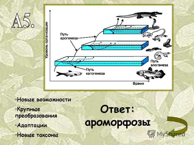 Новые возможности Крупные преобразования Адаптации Новые таксоны Ответ: ароморфозы