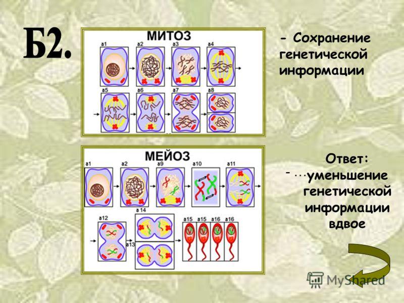 - Сохранение генетической информации - … Ответ: уменьшение генетической информации вдвое
