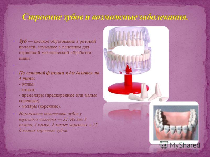 Зуб костное образование в ротовой полости, служащее в основном для первичной механической обработки пищи По основной функции зубы делятся на 4 типа: - резцы; - клыки; - премоляры (предкоренные или малые коренные); - моляры (коренные). Нормальное коли