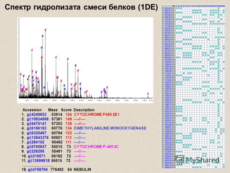 Accession Mass Score Description 1. gi|4249653 53914 154 CYTOCHROME P450 2E1 2. gi|10834998 57381 149 ----//---- 3. gi|6470141 57353 138 ----//---- 4. gi|6166183 60776 134 DIMETHYLANILINE MONOOXYGENASE 5. gi|6325467 60794 123 ----//---- 6. gi|1364337