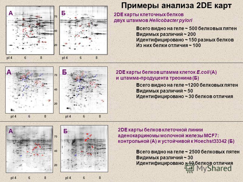 pI 4 6 8 70 40 20 pI 4 6 8 А АБ АБ 70 40 20 Б 70 40 20 pI 4 6 8 2DЕ карты белков клеточной линии аденокарциномы молочной железы MCF7: контрольной (А) и устойчивой к Hoechst33342 (Б) 2DE карты белков штамма клеток E.coli (А) и штамма-продуцента треони
