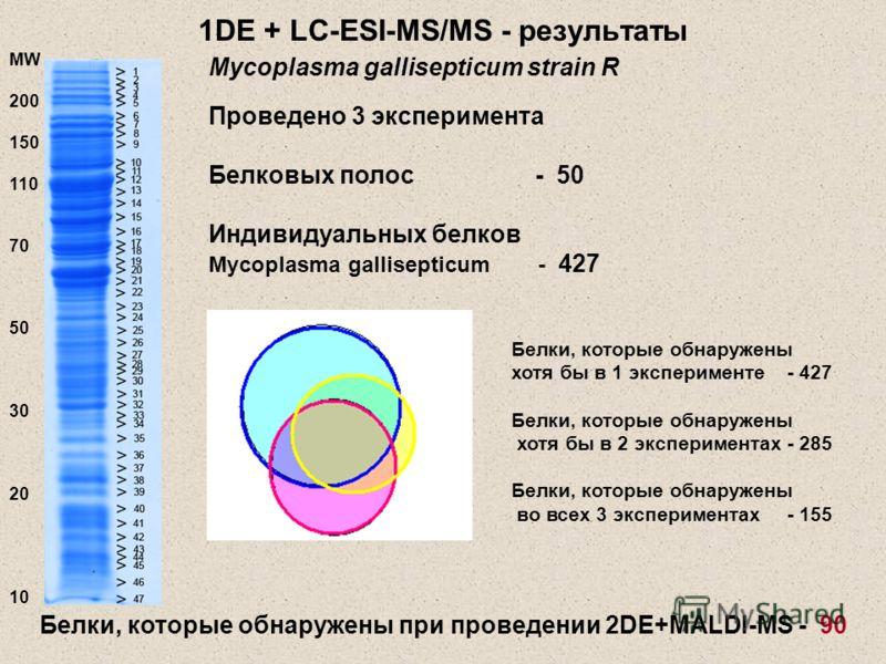 1DE + LC-ESI-MS/MS - результаты Проведено 3 эксперимента Белковых полос - 50 Индивидуальных белков Mycoplasma gallisepticum - 427 Эксп.1 Эксп.2 Эксп.3 Белки, которые обнаружены хотя бы в 1 эксперименте - 427 Белки, которые обнаружены хотя бы в 2 эксп