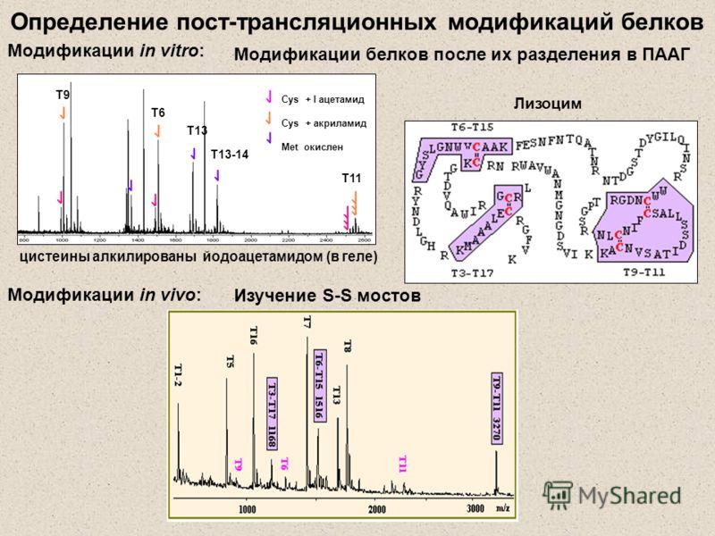 Определение пост-трансляционных модификаций белков Модификации in vitro: Модификации белков после их разделения в ПААГ цистеины алкилированы йодоацетамидом (в геле) Лизоцим Т11 Т9 Т6 Т13 Т13-14 Cys + I ацетамид Cys + акриламид Met окислен Модификации