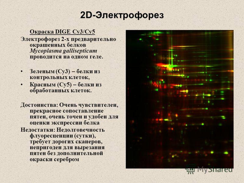 2D-Электрофорез Окраска DIGE Cy3/Cy5 Электрофорез 2-х предварительно окрашенных белков Mycoplasma gallisepticum проводится на одном геле. Зеленым (Cy3) – белки из контрольных клеток, Красным (Cy5) – белки из обработанных клеток. Достоинства: Очень чу