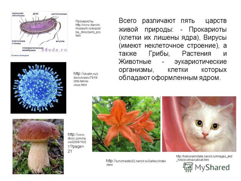 Всего различают пять царств живой природы: - Прокариоты (клетки их лишены ядра), Вирусы (имеют неклеточное строение), а также Грибы, Растения и Животные - эукариотические организмы, клетки которых обладают оформленным ядром. Прокариоты. http://www.da