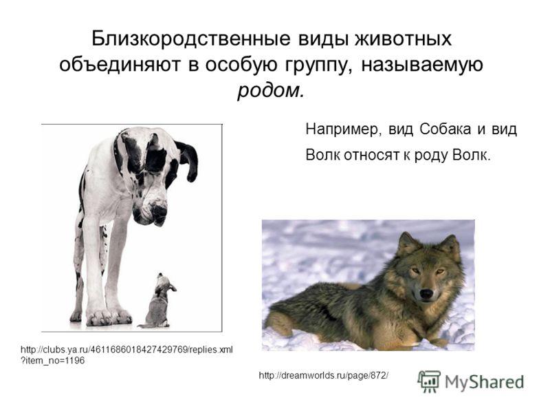 Например, вид Собака и вид Волк относят к роду Волк. http://dreamworlds.ru/page/872/ http://clubs.ya.ru/4611686018427429769/replies.xml ?item_no=1196 Близкородственные виды животных объединяют в особую группу, называемую родом.