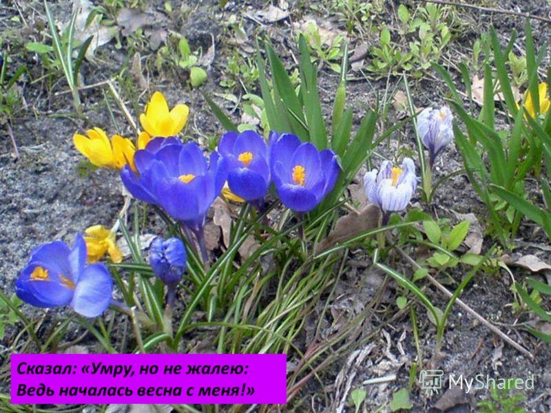 Сказал: «Умру, но не жалею: Ведь началась весна с меня!»