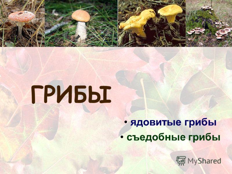 ГРИБЫ ядовитые грибы съедобные грибы