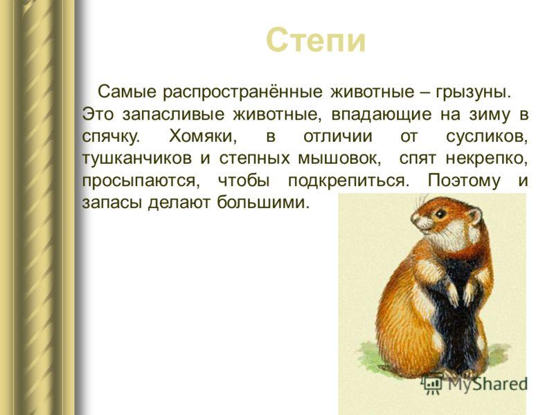 Самые распространённые животные – грызуны. Это запасливые животные, впадающие на зиму в спячку. Хомяки, в отличии от сусликов, тушканчиков и степных мышовок, спят некрепко, просыпаются, чтобы подкрепиться. Поэтому и запасы делают большими. Степи