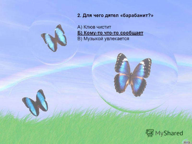 2. Для чего дятел «барабанит?» А) Клюв чистит Б) Кому-то что-то сообщает В) Музыкой увлекается