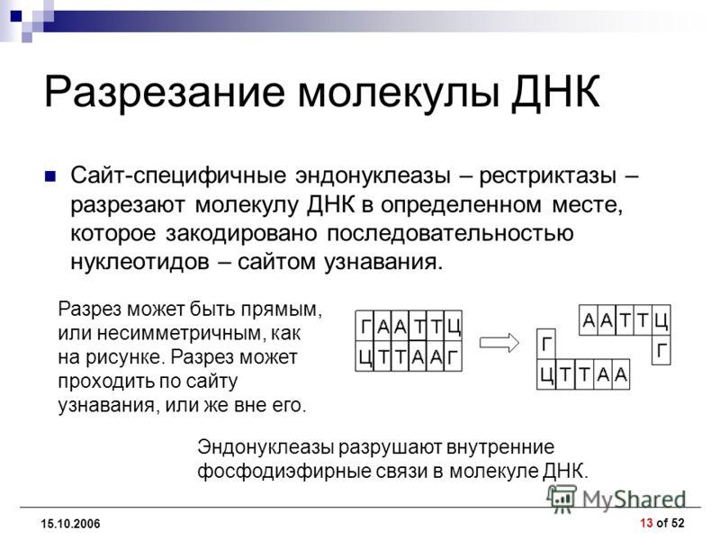 13 of 52 15.10.2006 Разрезание молекулы ДНК Сайт-специфичные эндонуклеазы – рестриктазы – разрезают молекулу ДНК в определенном месте, которое закодировано последовательностью нуклеотидов – сайтом узнавания. Разрез может быть прямым, или несимметричн