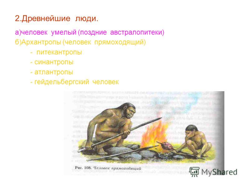 2.Древнейшие люди. а)человек умелый (поздние австралопитеки) б)Архантропы (человек прямоходящий) - питекантропы - синантропы - атлантропы - гейдельбергский человек