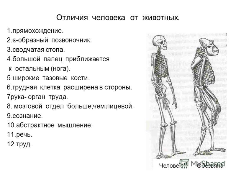Отличия человека от животных. 1.прямохождение. 2.s-образный позвоночник. 3.сводчатая стопа. 4.большой палец приближается к остальным (нога). 5.широкие тазовые кости. 6.грудная клетка расширена в стороны. 7рука- орган труда. 8. мозговой отдел больше,ч