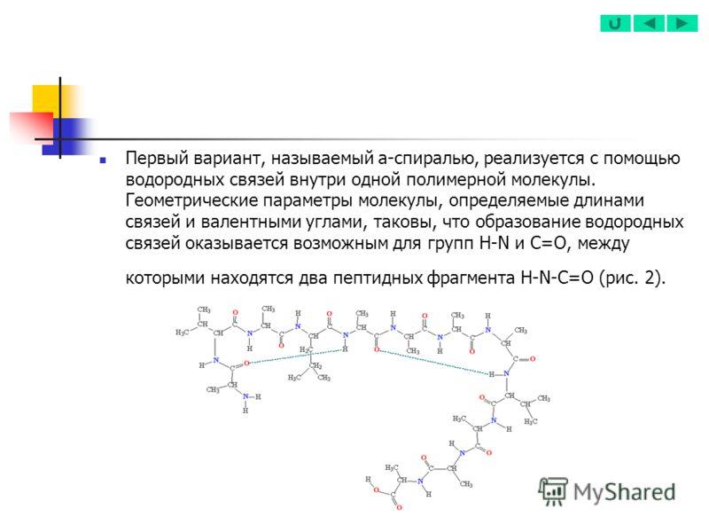 Первый вариант, называемый a-спиралью, реализуется с помощью водородных связей внутри одной полимерной молекулы. Геометрические параметры молекулы, определяемые длинами связей и валентными углами, таковы, что образование водородных связей оказывается