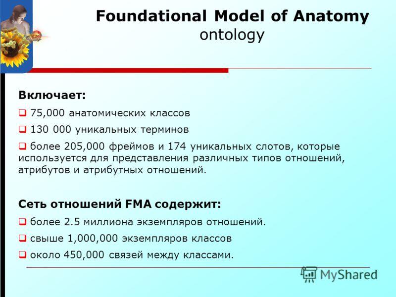 Foundational Model of Anatomy ontology Включает: 75,000 анатомических классов 130 000 уникальных терминов более 205,000 фреймов и 174 уникальных слотов, которые используется для представления различных типов отношений, атрибутов и атрибутных отношени