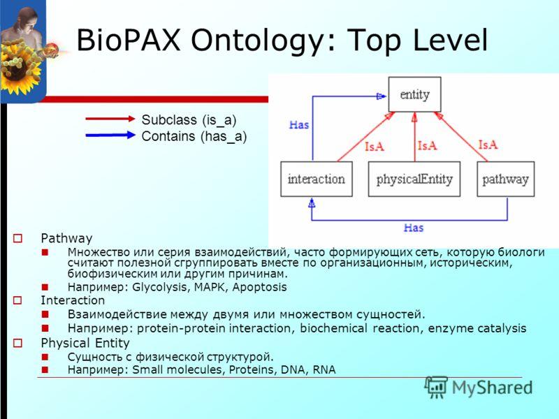 BioPAX Ontology: Top Level Subclass (is_a) Contains (has_a) Pathway Множество или серия взаимодействий, часто формирующих сеть, которую биологи считают полезной сгруппировать вместе по организационным, историческим, биофизическим или другим причинам.