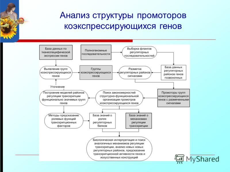 Анализ структуры промоторов коэкспрессирующихся генов