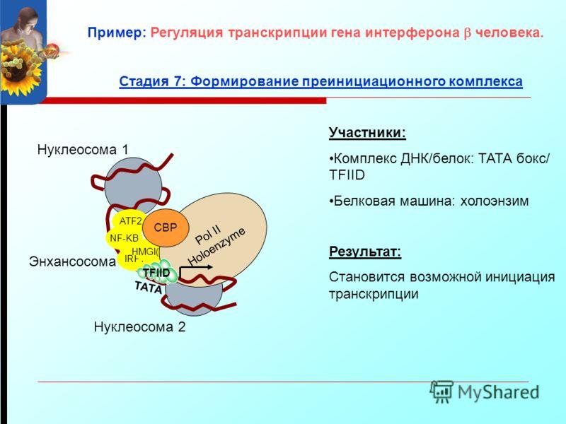 ATF2 NF-KB IRF1 Энхансосома Участники: Комплекс ДНК/белок: ТАТА бокс/ TFIID Белковая машина: холоэнзим Результат: Становится возможной инициация транскрипции Нуклеосома 1 Нуклеосома 2 Стадия 7: Формирование преинициационного комплекса HMGI(Y) Pol II