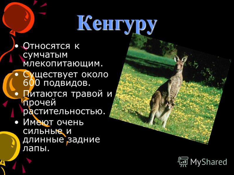 Кенгуру Относятся к сумчатым млекопитающим. Существует около 600 подвидов. Питаются травой и прочей растительностью. Имеют очень сильные и длинные задние лапы.