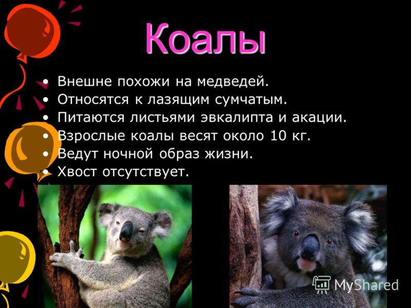 Коалы Внешне похожи на медведей. Относятся к лазящим сумчатым. Питаются листьями эвкалипта и акации. Взрослые коалы весят около 10 кг. Ведут ночной образ жизни. Хвост отсутствует.