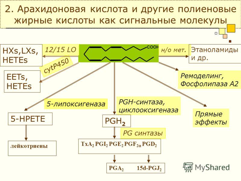 2. Арахидоновая кислота и другие полиеновые жирные кислоты как сигнальные молекулы COOH PGH-синтаза, циклооксигеназа PGH 2 PG синтазы TxA 2 PGI 2 PGE 2 PGF 2 PGD 2 PGA 2 15d-PGJ 2 5-липоксигеназа 5-HPETE лейкотриены EETs, HETEs cytP450 12/15 LO HXs,L