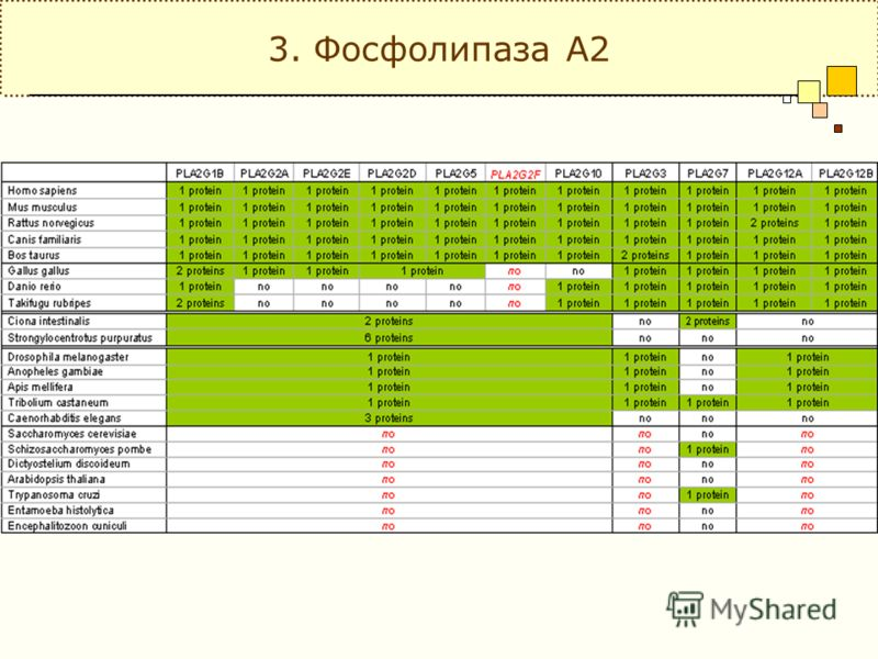 3. Фосфолипаза А2