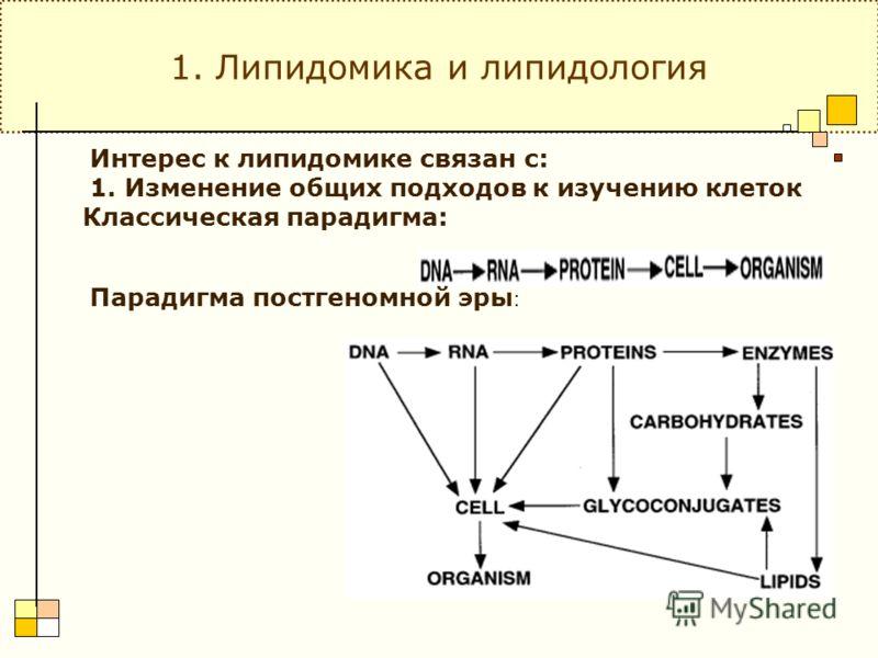 Классическая парадигма: Парадигма постгеномной эры : 1. Липидомика и липидология Интерес к липидомике связан с: 1. Изменение общих подходов к изучению клеток