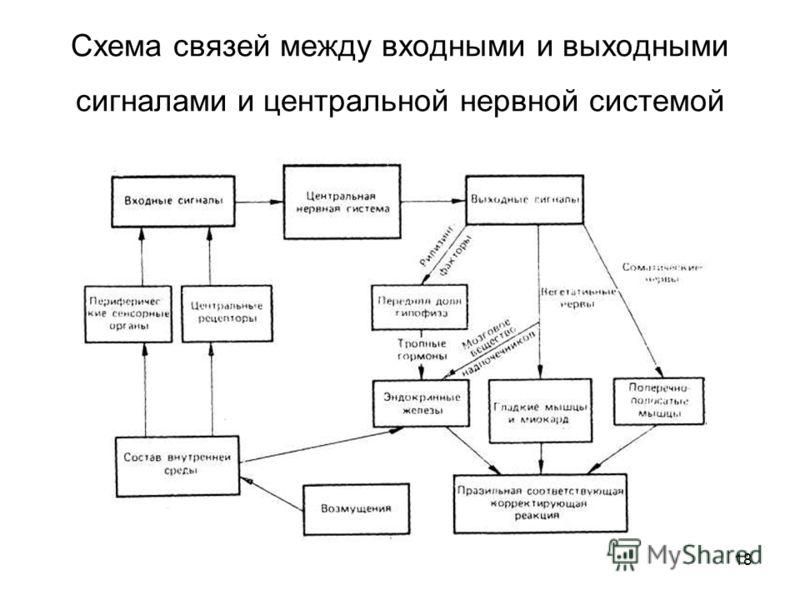 18 Схема связей между входными и выходными сигналами и центральной нервной системой