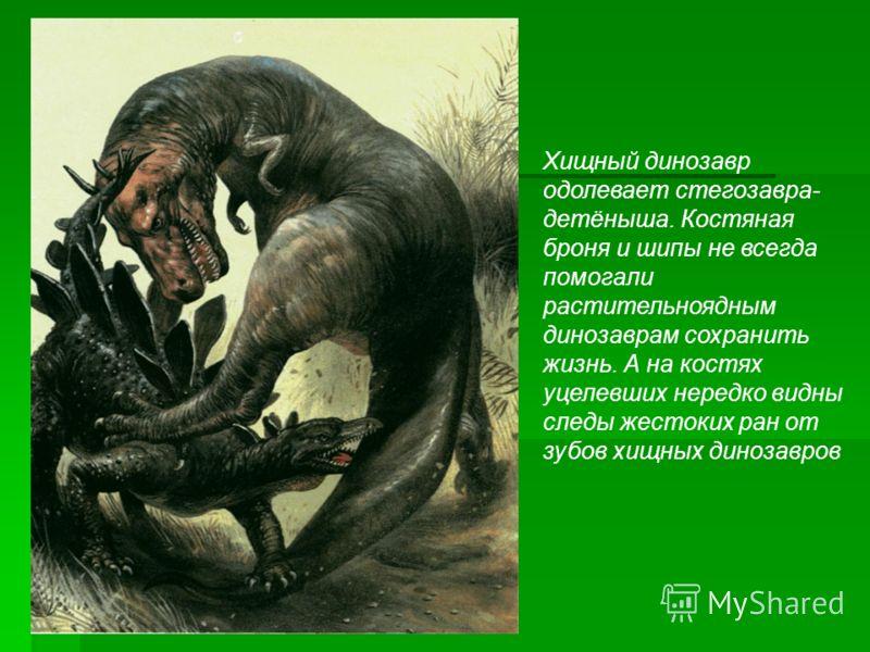 Хищный динозавр одолевает стегозавра- детёныша. Костяная броня и шипы не всегда помогали растительноядным динозаврам сохранить жизнь. А на костях уцелевших нередко видны следы жестоких ран от зубов хищных динозавров