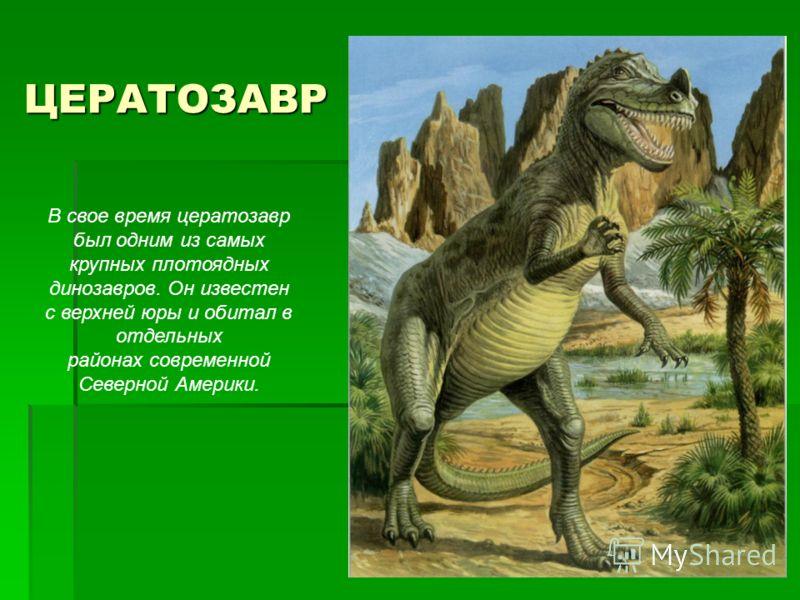 ЦЕРАТОЗАВР В свое время цератозавр был одним из самых крупных плотоядных динозавров. Он известен с верхней юры и обитал в отдельных районах современной Северной Америки.