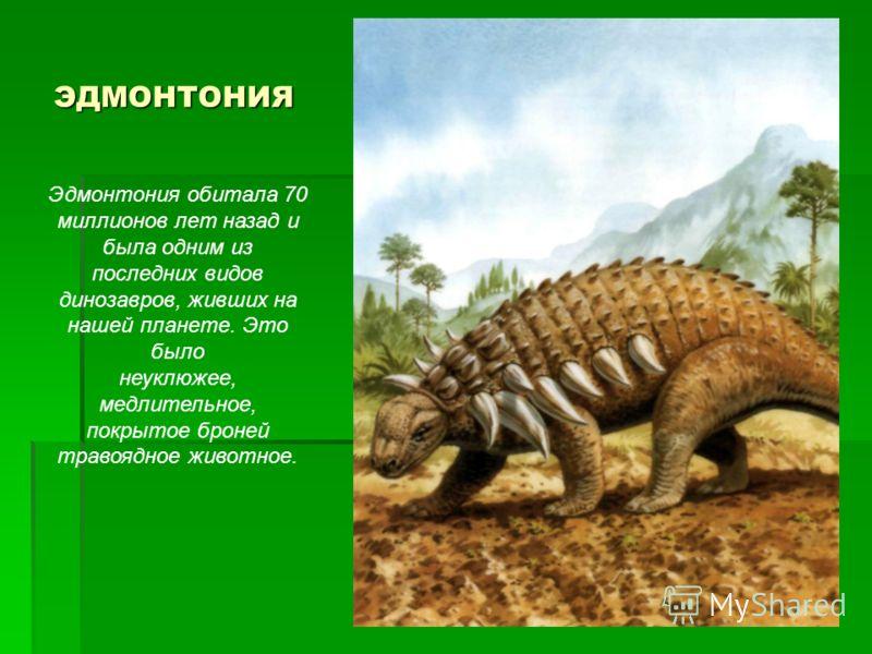 ЭДМОНТОНИЯ Эдмонтония обитала 70 миллионов лет назад и была одним из последних видов динозавров, живших на нашей планете. Это было неуклюжее, медлительное, покрытое броней травоядное животное.
