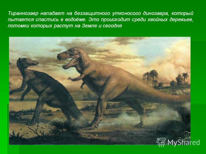 Тираннозавр нападает на беззащитного утконосого динозавра, который пытается спастись в водоёме. Это происходит среди хвойных деревьев, потомки которых растут на Земле и сегодня