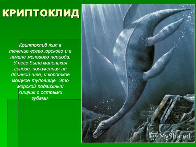 КРИПТОКЛИД Криптоклид жил в течение всего юрского и в начале мелового периода. У него была маленькая голова, посаженная на длинной шее, и короткое мощное туловище. Это морской подвижный хищник с острыми зубами.