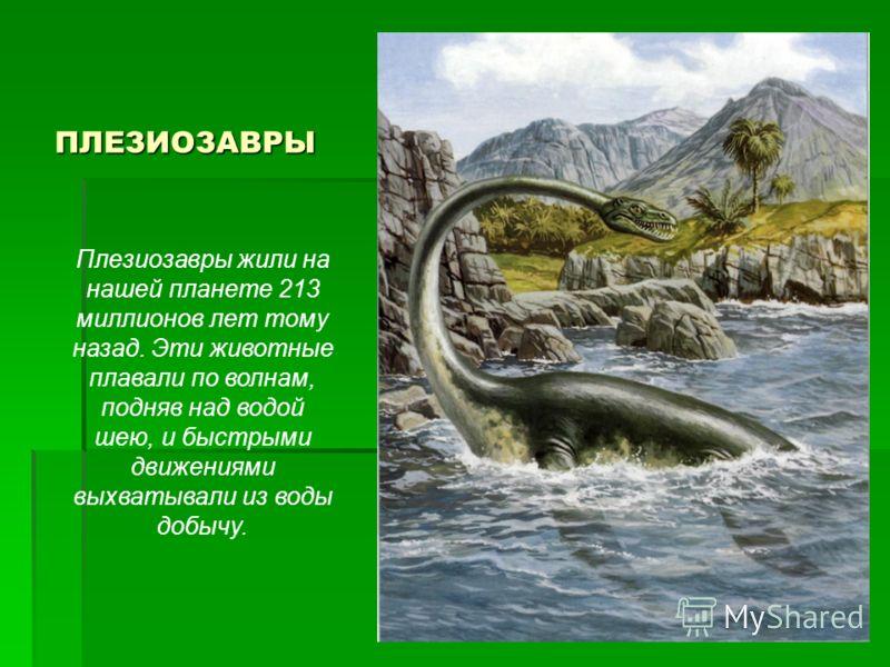 ПЛЕЗИОЗАВРЫ ПЛЕЗИОЗАВРЫ Плезиозавры жили на нашей планете 213 миллионов лет тому назад. Эти животные плавали по волнам, подняв над водой шею, и быстрыми движениями выхватывали из воды добычу.