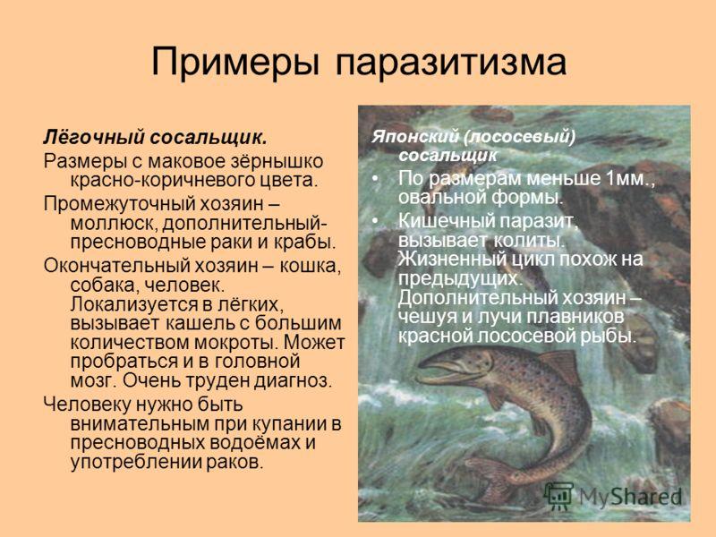 Примеры паразитизма Лёгочный сосальщик. Размеры с маковое зёрнышко красно-коричневого цвета. Промежуточный хозяин – моллюск, дополнительный- пресноводные раки и крабы. Окончательный хозяин – кошка, собака, человек. Локализуется в лёгких, вызывает каш