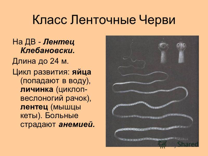 Класс Ленточные Черви На ДВ - Лентец Клебановски. Длина до 24 м. Цикл развития: яйца (попадают в воду), личинка (циклоп- веслоногий рачок), лентец (мышцы кеты). Больные страдают анемией.