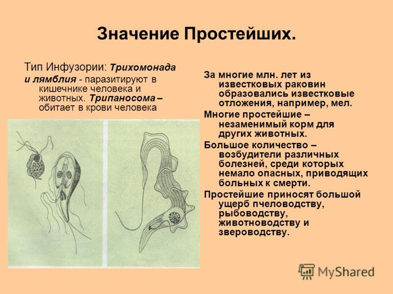 Значение Простейших. Тип Инфузории: Трихомонада и лямблия - паразитируют в кишечнике человека и животных. Трипаносома – обитает в крови человека За многие млн. лет из известковых раковин образовались известковые отложения, например, мел. Многие прост