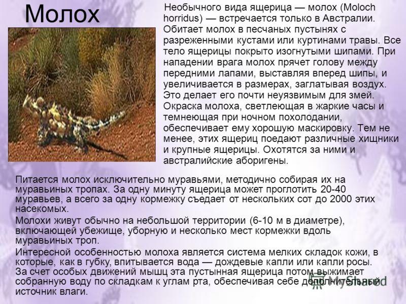 Молох Необычного вида ящерица молох (Moloch horridus) встречается только в Австралии. Обитает молох в песчаных пустынях с разреженными кустами или куртинами травы. Все тело ящерицы покрыто изогнутыми шипами. При нападении врага молох прячет голову ме