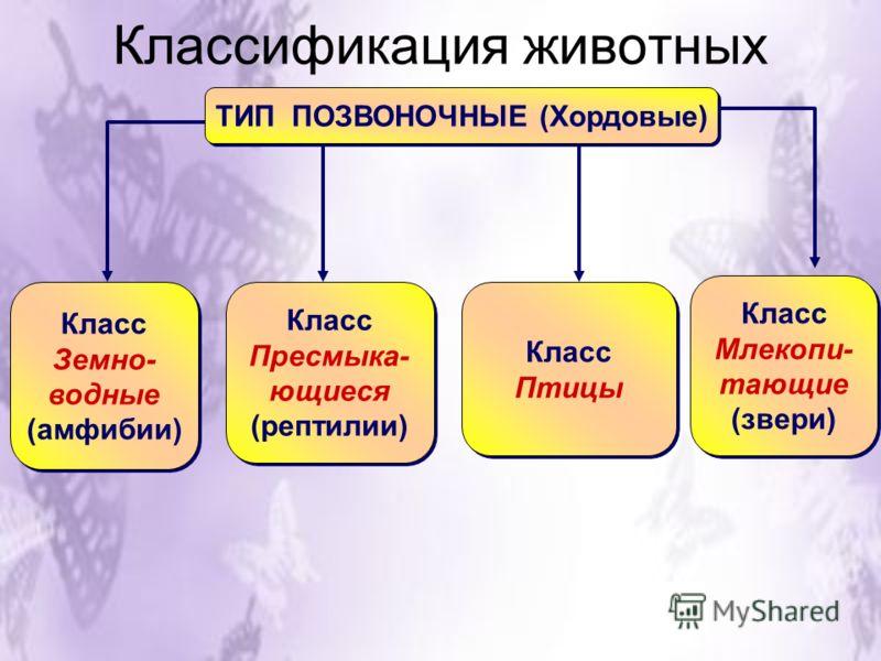 Классификация животных ТИП ПОЗВОНОЧНЫЕ (Хордовые) Класс Земно- водные (амфибии) Класс Земно- водные (амфибии) Класс Пресмыка- ющиеся (рептилии) Класс Пресмыка- ющиеся (рептилии) Класс Птицы Класс Птицы Класс Млекопи- тающие (звери) Класс Млекопи- таю