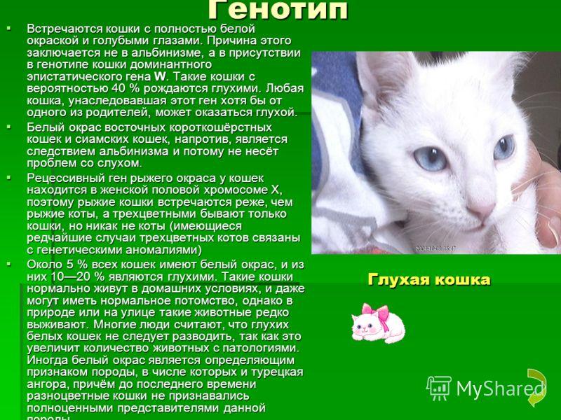 Генотип Генотип Встречаются кошки с полностью белой окраской и голубыми глазами. Причина этого заключается не в альбинизме, а в присутствии в генотипе кошки доминантного эпистатического гена W. Такие кошки с вероятностью 40 % рождаются глухими. Любая