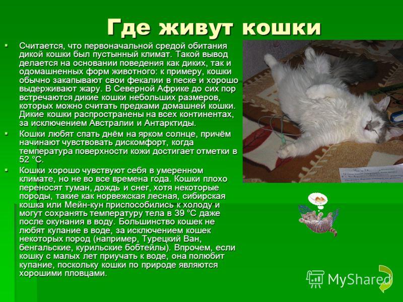 Где живут кошки Где живут кошки Считается, что первоначальной средой обитания дикой кошки был пустынный климат. Такой вывод делается на основании поведения как диких, так и одомашненных форм животного: к примеру, кошки обычно закапывают свои фекалии