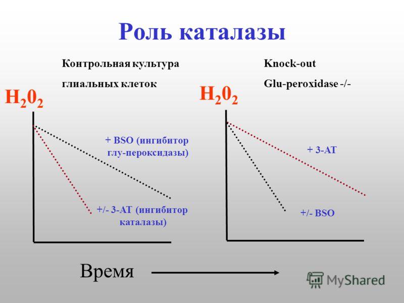 Роль каталазы Н202Н202 Н202Н202 Время Контрольная культураKnock-out глиальных клетокGlu-peroxidase -/- + BSO (ингибитор глу-пероксидазы) +/- 3-АТ (ингибитор каталазы) + 3-АТ +/- ВSО