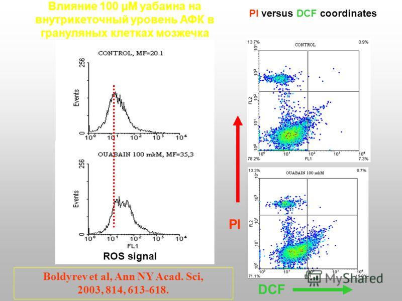 Влияние 100 µM уабаина на внутрикеточный уровень АФК в грануляных клетках мозжечка ROS signal PI versus DCF coordinates PI DCF Boldyrev et al, Ann NY Acad. Sci, 2003, 814, 613-618.