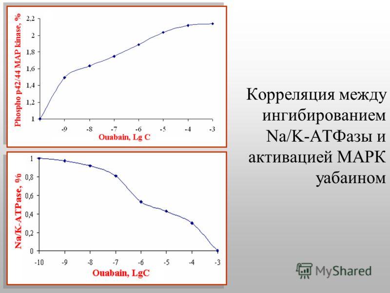 Корреляция между ингибированием Na/K-АТФазы и активацией МАРК уабаином