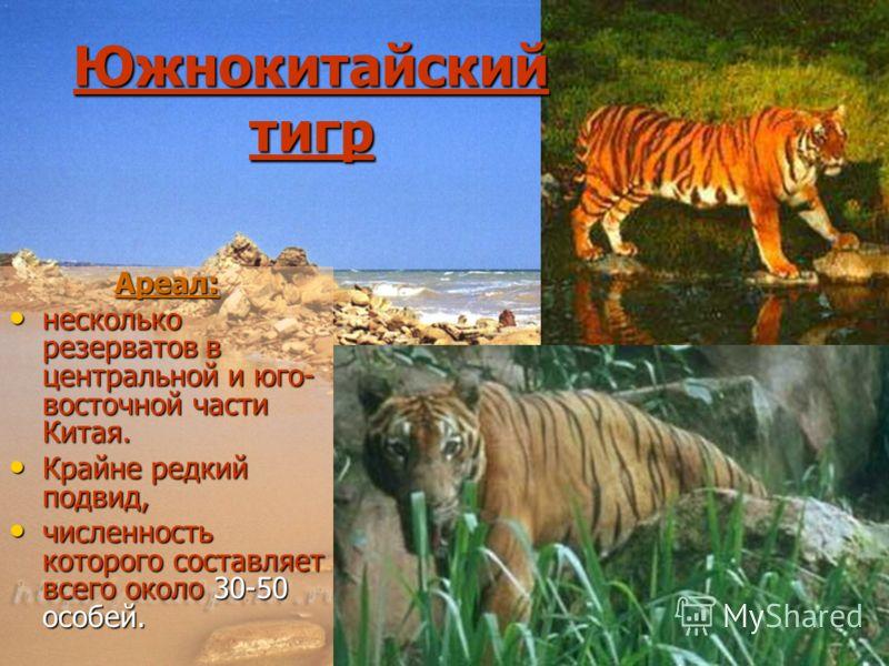 Южнокитайский тигр Ареал: несколько резерватов в центральной и юго- восточной части Китая. несколько резерватов в центральной и юго- восточной части Китая. Крайне редкий подвид, Крайне редкий подвид, численность которого составляет всего около 30-50