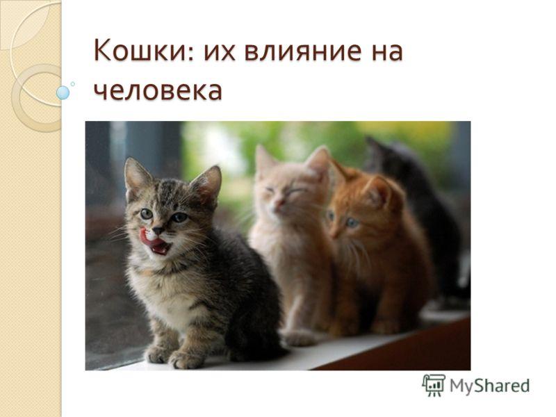 Кошки : их влияние на человека
