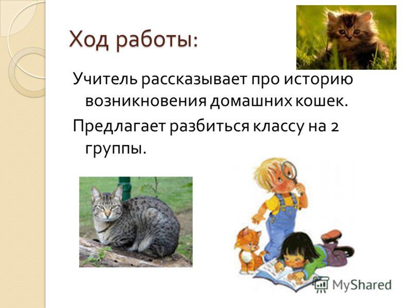 Ход работы : Учитель рассказывает про историю возникновения домашних кошек. Предлагает разбиться классу на 2 группы.