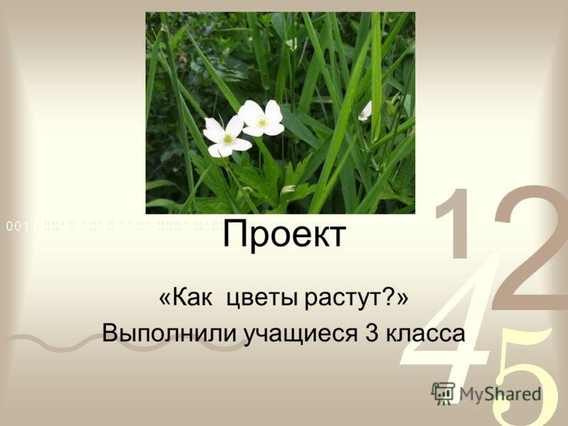 Проект «Как цветы растут?» Выполнили учащиеся 3 класса