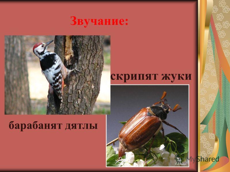 Звучание: скрипят жуки барабанят дятлы